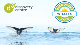 discovery days whales