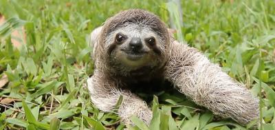 Sloth Discovery Centre Membership